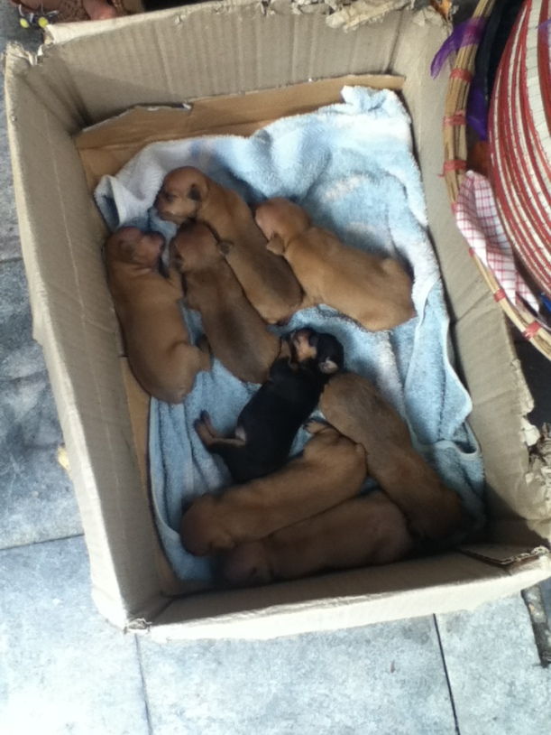 Who doesn't like a box full of puppies? On the roadside in Hanoi.